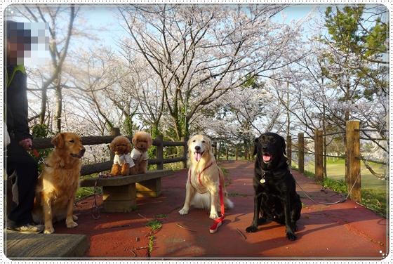 2014,4,9湖畔公園10