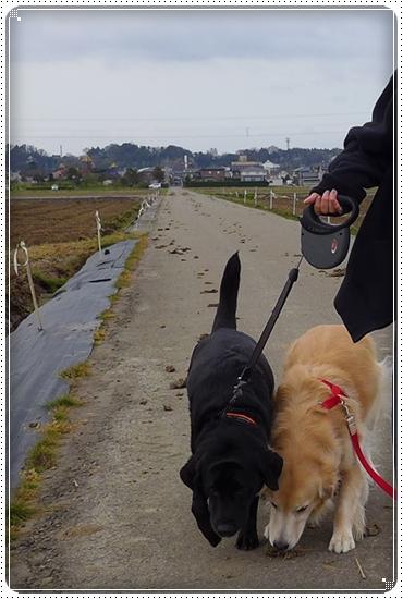 2014,4,10お散歩2