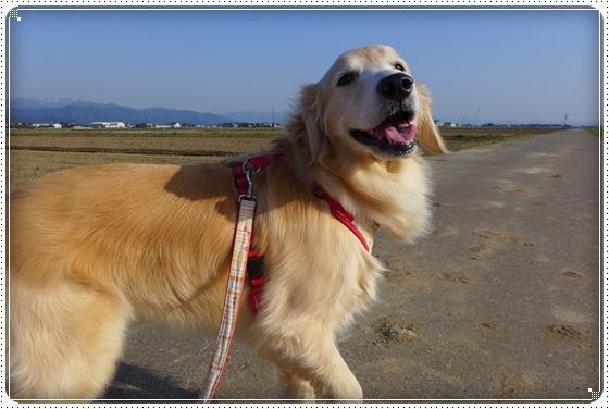 2014,4,11お散歩1