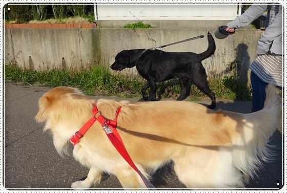 2014,4,14お散歩2
