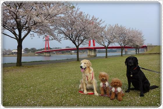 2014,4,16お散歩1
