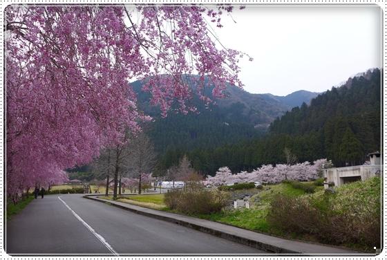2014,4,17枝垂桜1