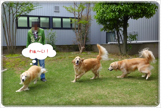 2014,5,4お庭遊び1
