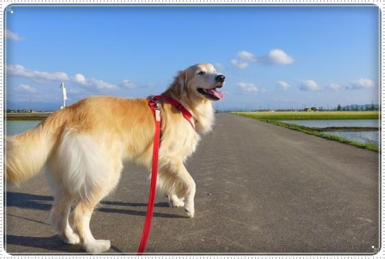 2014,5,16お散歩2