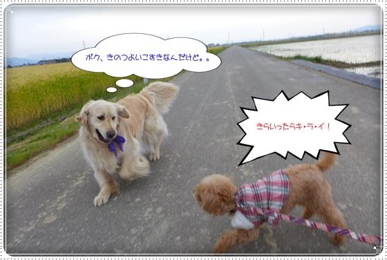 2014,5,20お散歩6