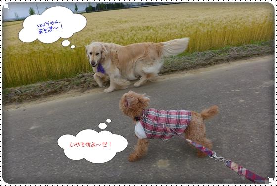 2014,5,20お散歩2