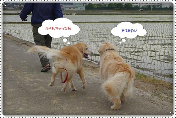 2014,5,20お散歩7