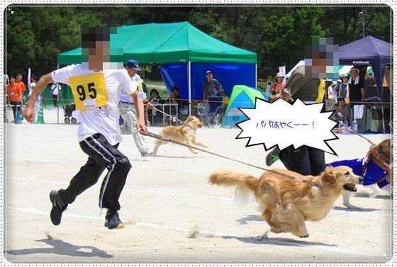 2014,5,25運動会14