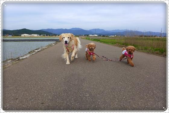 2014,5,27お散歩6