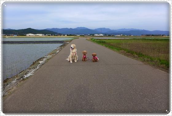 2014,5,27お散歩5