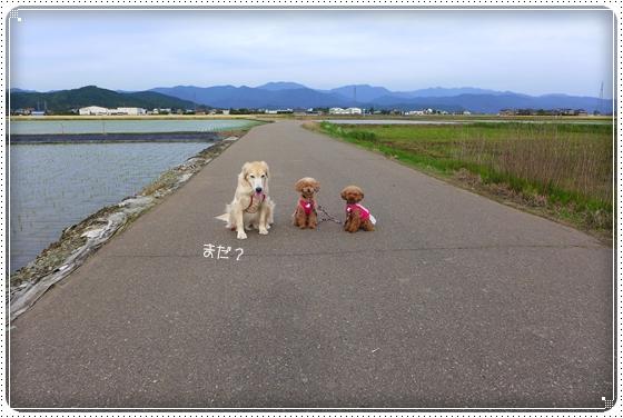 2014,5,27お散歩4