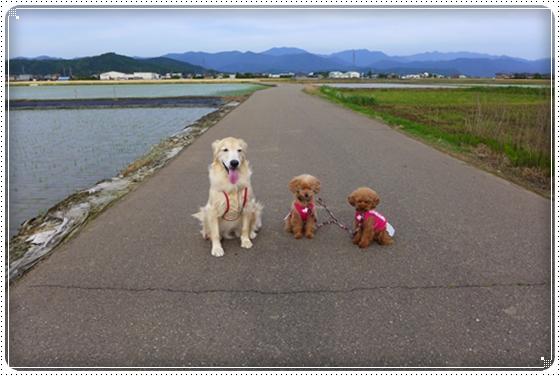 2014,5,27お散歩3