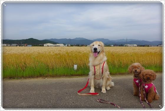 2014,5,27お散歩1