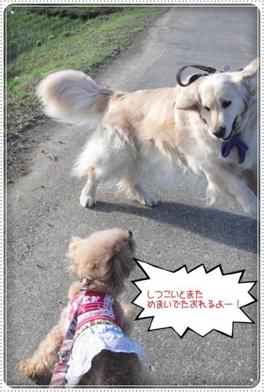 2014,5,28お散歩6