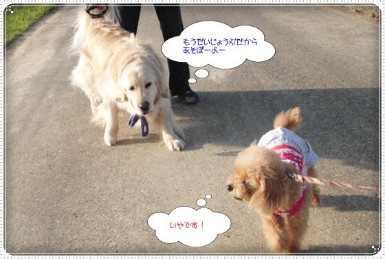 2014,5,28お散歩4