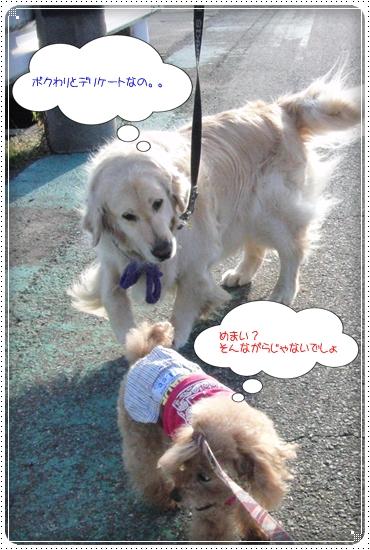 2014,5,28お散歩3