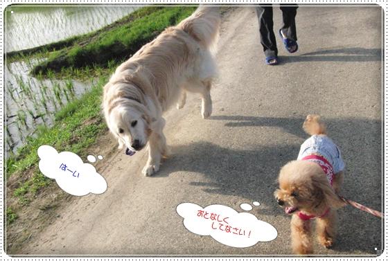 2014,5,28お散歩8