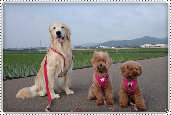 2014,6,5お散歩1