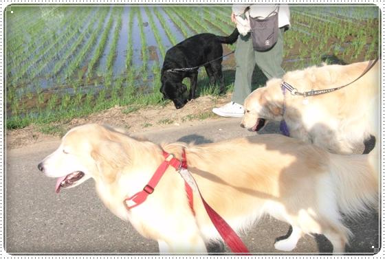 2014,6,6お散歩4