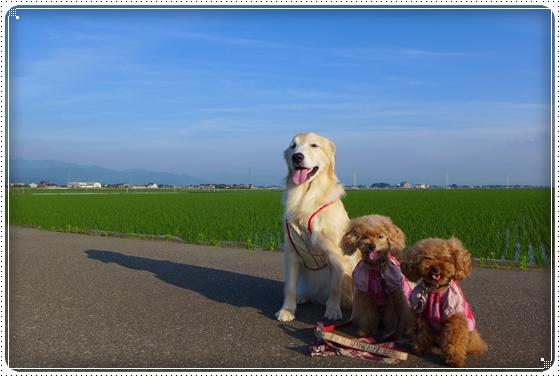 2014,6,14お散歩8