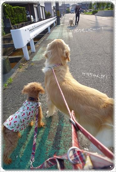 2014,6,19お散歩2