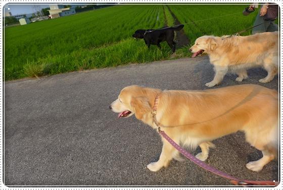 2014,6,19お散歩10