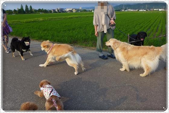 2014,6,19お散歩8