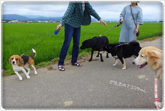 2014,6,23お散歩4