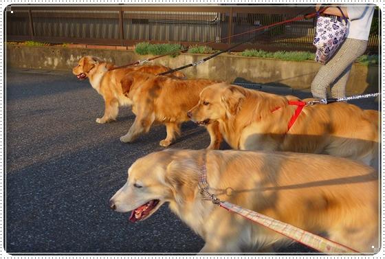 2014,6,25お散歩5