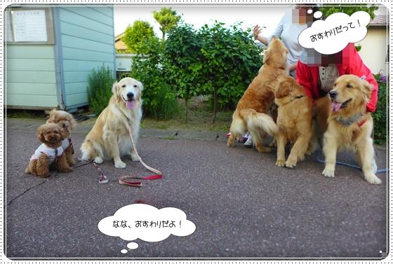 2014,6,25お散歩8
