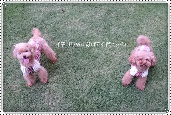 2014,6,26お庭遊び3