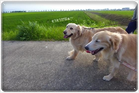2014,6,27お散歩3