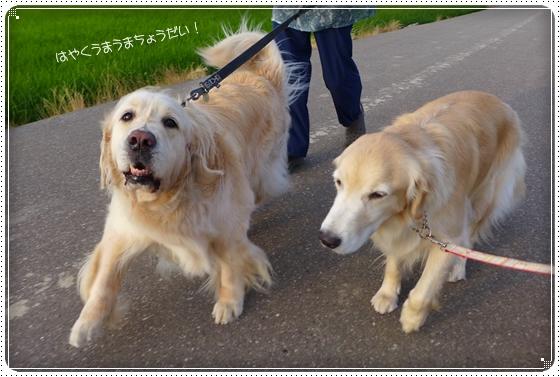 2014,6,27お散歩4