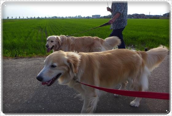 2014,6,27お散歩2