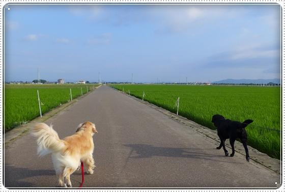 2014,7,1お散歩2