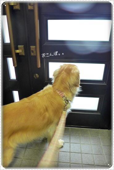 2014,7,8お散歩4