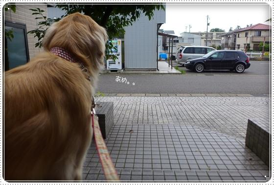 2014,7,8お散歩2