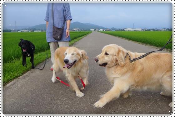 2014,7,11お散歩4