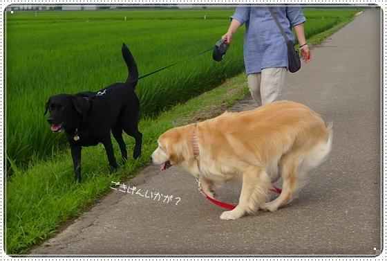 2014,7,11お散歩2