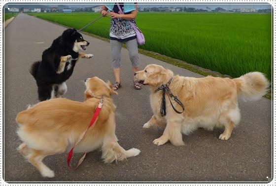 2014,7,11お散歩9