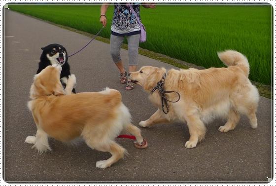 2014,7,11お散歩8