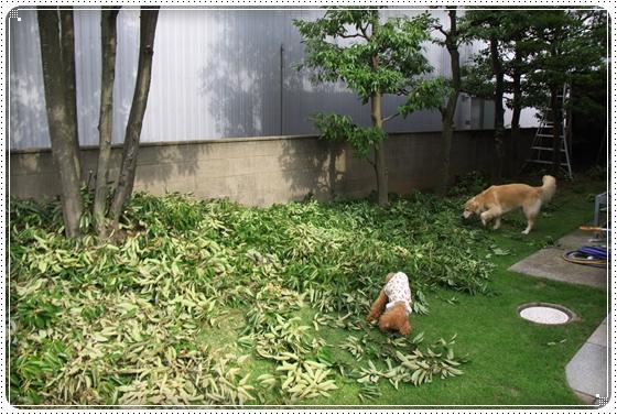 2014,7,16お庭遊び11