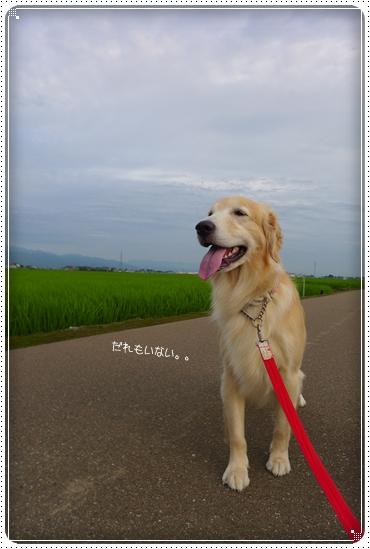 2014,7,17お散歩2