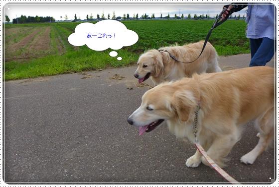 2014,7,18お散歩8