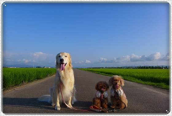 2014,7,20お散歩2