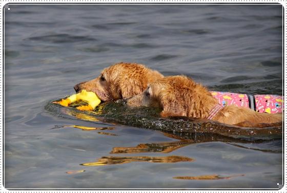 201010琵琶湖