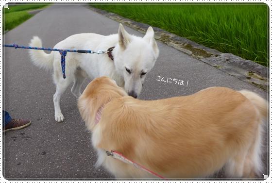 2014,8,2お散歩5