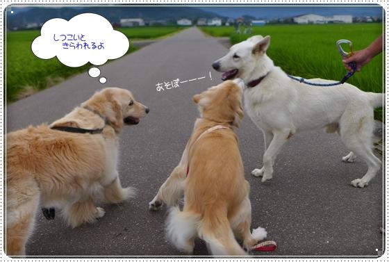 2014,8,2お散歩9