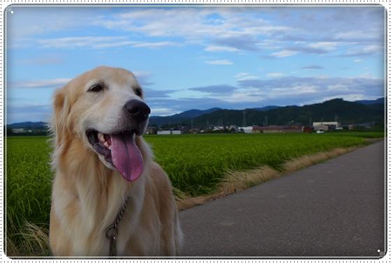 2014,8,4お散歩2