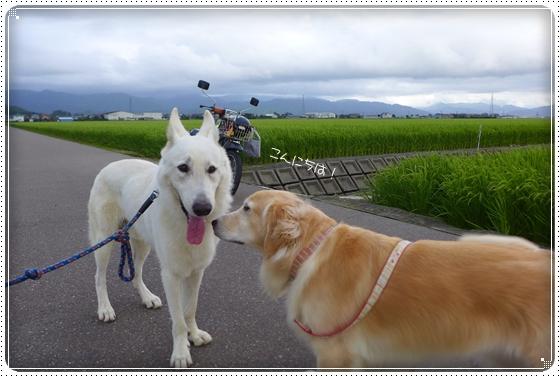 2014,8,11お散歩1